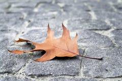 Cuneo della foglia di autunno Immagini Stock