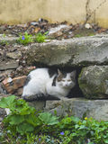 Cunning cat sitting among stones royalty free stock photography