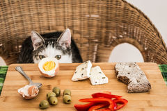 Cunning cat stealing breakfast Stock Image