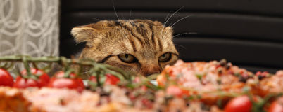 Cunning and dissatisfied look. Of a cat Stock Photo