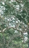 Cunningham del lago tree Imagenes de archivo