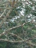 Cunningham del lago tree Imagen de archivo libre de regalías