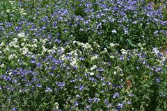 Cunningham Gulch Flowers image libre de droits