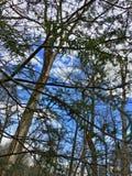 Cunningham Spada drzewa i niebo Zdjęcia Royalty Free