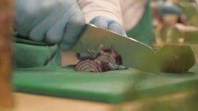 Cuoco del cuoco unico delle mani che taglia le cipolle rosse a bordo nella fine della cucina del ristorante su archivi video