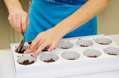 Cuoco unico che prepara dessert Fotografia Stock
