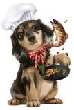 Cuoco unico del cucciolo illustrazione di stock