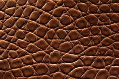 Cuoio del coccodrillo del Brown Fotografia Stock
