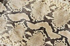 Cuoio della pelle di serpente Fotografie Stock
