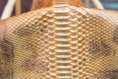 Cuoio genuino dello snakeskin del pitone, pelle di serpente, fondo di struttura Piscina su un fondo Immagine Stock