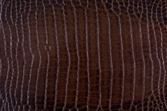 Cuoio marrone del serpente di struttura Fotografia Stock Libera da Diritti