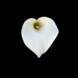 Cuore bianco Fotografia Stock Libera da Diritti