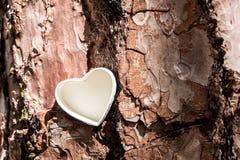 Cuore bianco sull'albero Immagini Stock