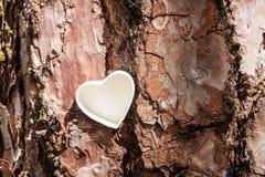 Cuore bianco sull'albero Fotografia Stock