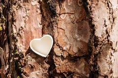 Cuore bianco sull'albero Immagini Stock Libere da Diritti
