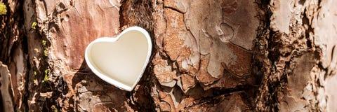 Cuore bianco sull'albero Immagine Stock Libera da Diritti