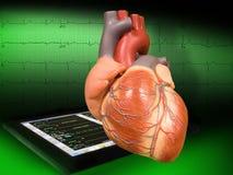 Cuore con EKG Fotografia Stock