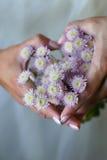 Cuore dai crisantemi fotografia stock
