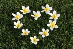 Cuore dai fiori su un'erba verde Immagini Stock Libere da Diritti