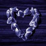 Cuore dai petali del fiore Fotografie Stock Libere da Diritti