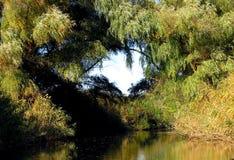 Cuore degli alberi Fotografie Stock