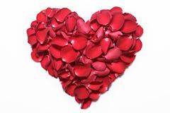 Cuore dei petali di rosa rossa su fondo bianco San Valentino, fondo di anniversario ecc Immagine Stock