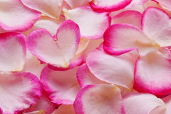 Cuore dei petali rosa del biglietto di S. Valentino. Fotografia Stock
