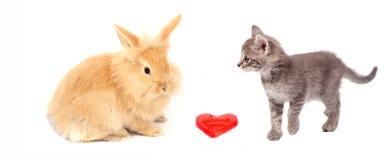 Cuore del biglietto di S. Valentino e gatto e coniglio Immagini Stock Libere da Diritti