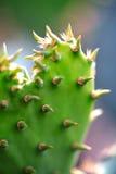 Cuore del cactus Fotografie Stock Libere da Diritti