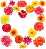 Cuore del fiore Fotografia Stock Libera da Diritti