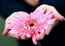 Cuore del fiore Fotografie Stock