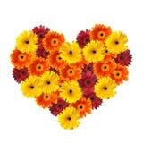 Cuore del fiore Immagine Stock