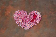 Cuore del fiore del frangipane Immagini Stock Libere da Diritti