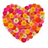 Cuore del fiore di zinnias Fotografia Stock Libera da Diritti