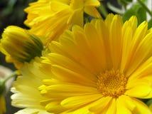 Cuore del sole Immagini Stock Libere da Diritti