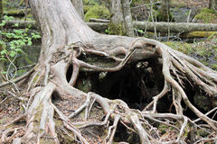 Cuore dell'albero Immagini Stock