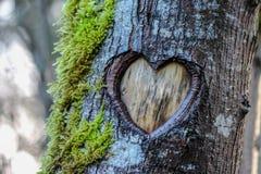 Cuore dell'albero Fotografia Stock