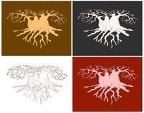 Cuore dell'albero del baobab Fotografia Stock