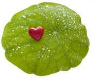 Cuore della foglia di amore dell'ambiente Fotografie Stock