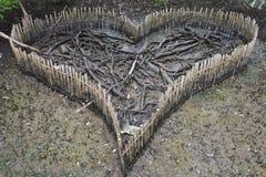 Cuore della foresta della mangrovia Fotografia Stock