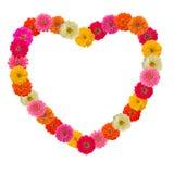 Cuore della pagina del fiore di zinnias Immagine Stock