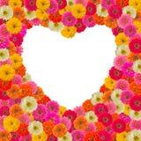 Cuore della pagina del fiore di zinnias Fotografia Stock Libera da Diritti