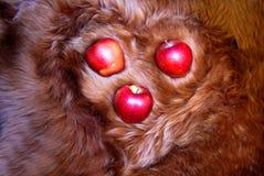 Cuore della pelliccia con le mele rosse Fotografia Stock Libera da Diritti
