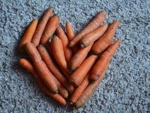 Cuore delle carote Immagine Stock