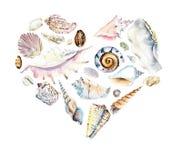 Cuore delle conchiglie Illustrazione disegnata a mano dell'acquerello immagini stock libere da diritti