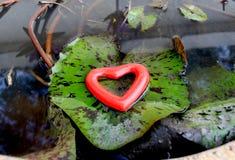 Cuore di amore sulla foglia del loto Immagini Stock Libere da Diritti
