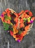 Cuore di autunno dalle piante della foresta immagine stock