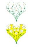 cuore di crescita di fiori Fotografia Stock