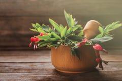 Cuore di emorragia rosso del fiore in mortaio Fotografia Stock