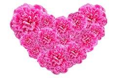 Cuore di giorno di biglietti di S. Valentino fatto delle rose rosa isolate su fondo bianco Fotografia Stock